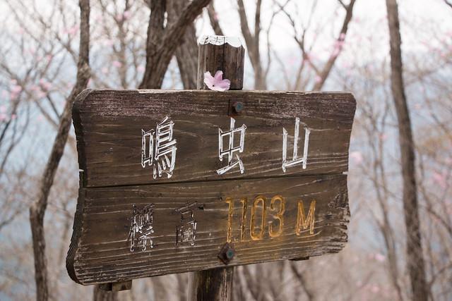 20150425_鳴虫山_0241
