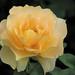 Softness by Cher12861 (Cheryl Kelly on ipernity)