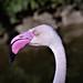 Flamingo in profile by sharon'soutlook