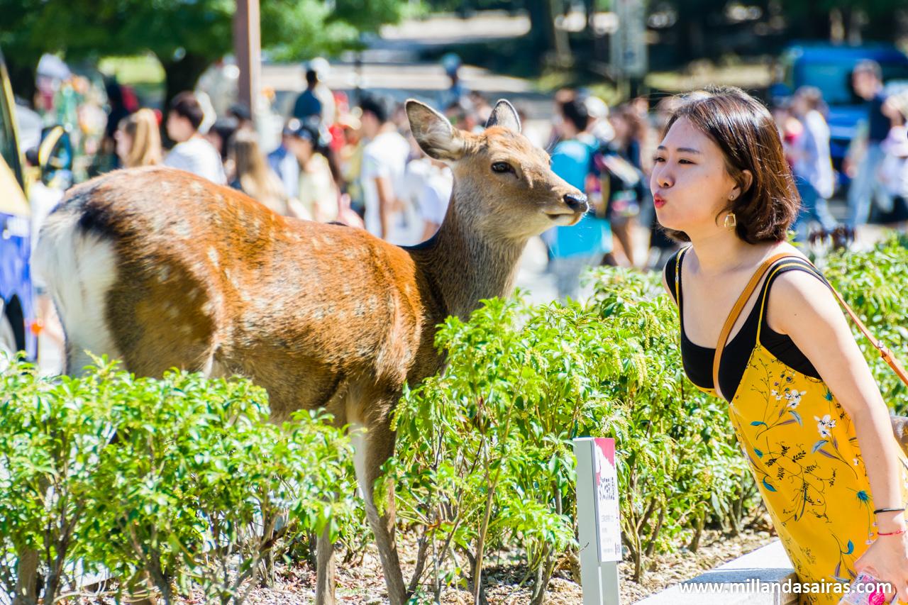 Amor por los ciervos en Nara