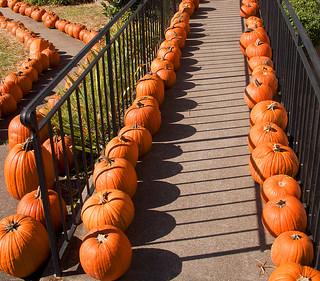 Pumpkins -- Forest United Methodist Church Arlington (VA) October 2016