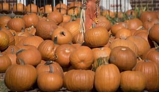 Pumpkin Patch Arlington (VA) October 2016
