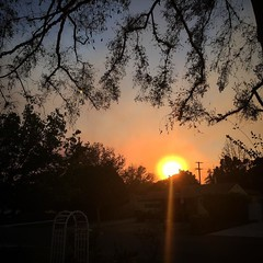 Smokey Sunset in Van Nuys Winds seem to have strengthened but shifted so we aren't getting quite as much smoke as earlier, but still heavily smells of smoke. #creekfire #lafire #smoke #sky #sun #trees #outdoors #nature #fire #wildfire