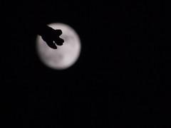 The Moon!