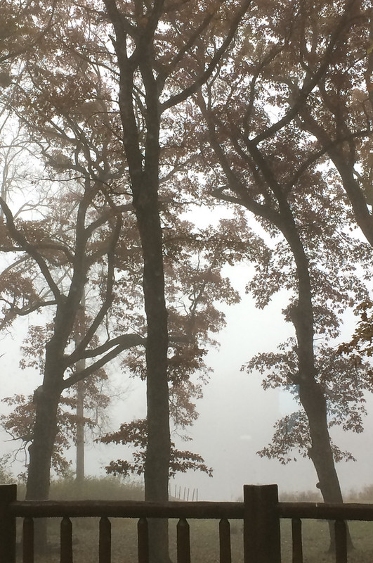 A foggy day on the lake