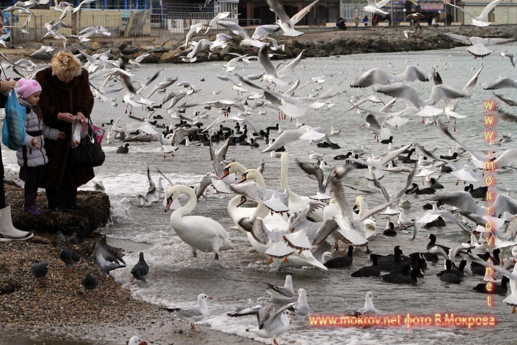 Птичий базар в Анапе.