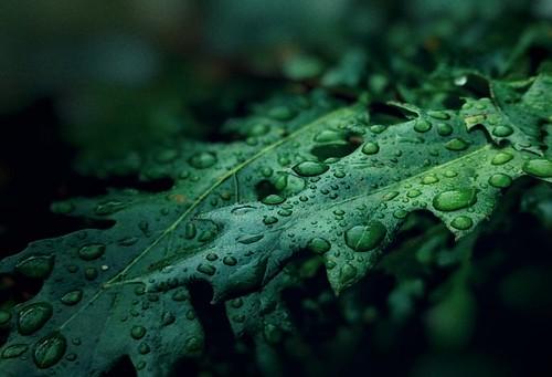 Rainy season has poured its load