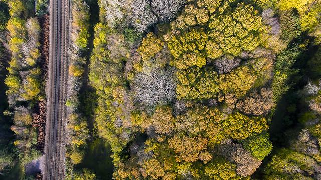Marline Valley Woods.