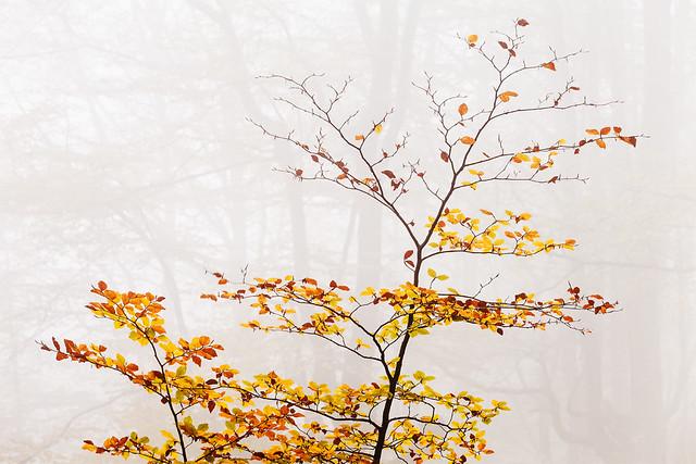 Autumnal Present