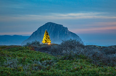 Christmas Tree and the Rock