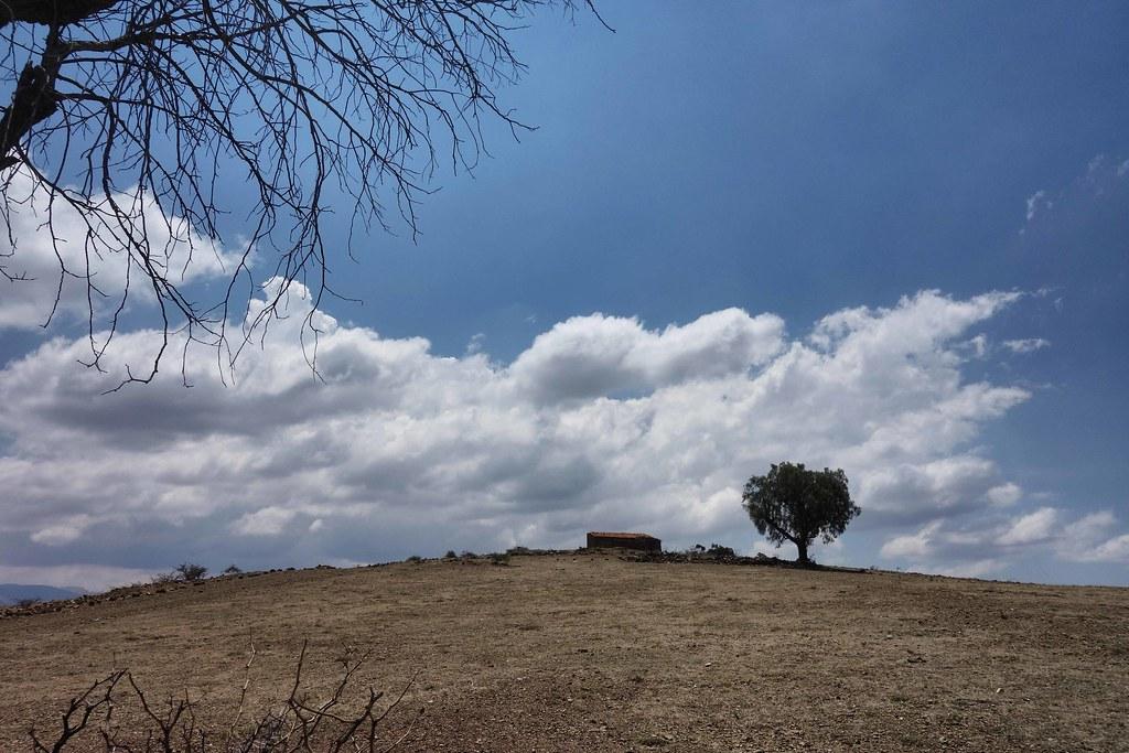 Sucre - Tree
