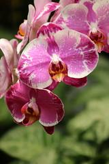 Orquideas en GYE_2017