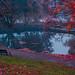 An autumn foggy pond #2 by alexey & kuzma