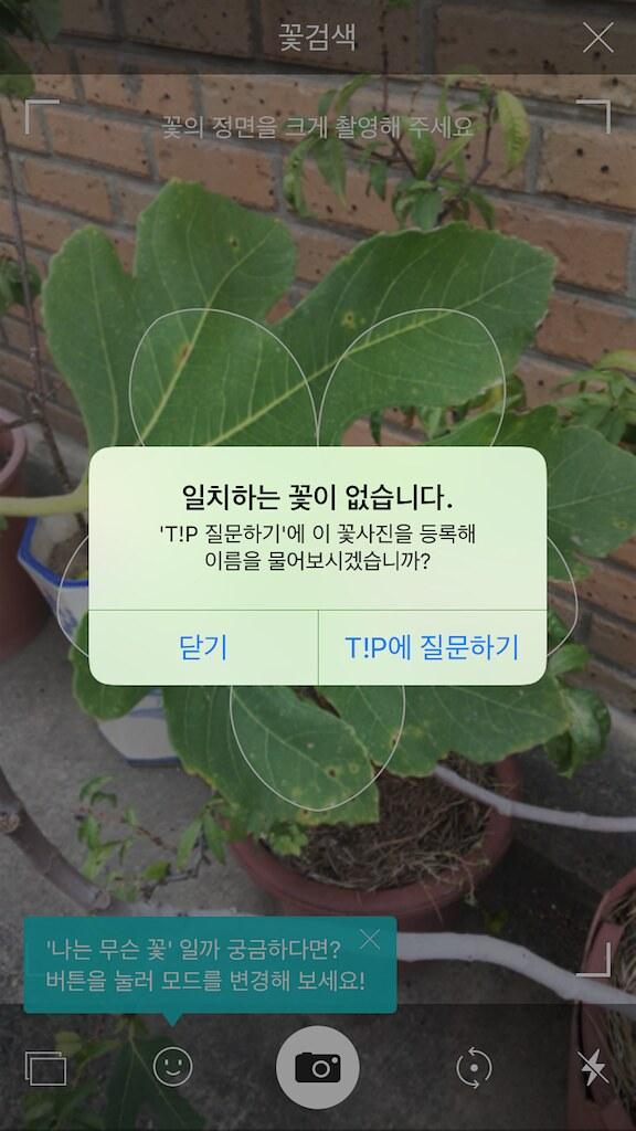 koreanapps-flowersearch15