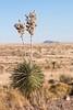 Yucca by Stuart Borrett