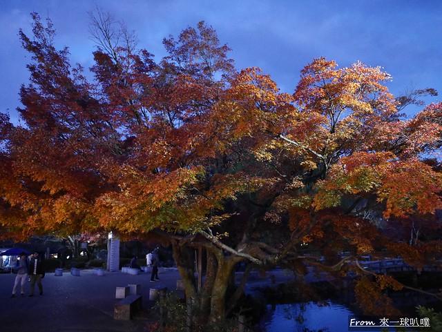 八阪神社49