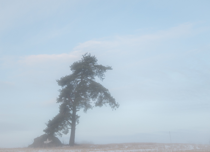 winter wonderland sumuinen maalaismaisema talvella rural yksinäinen puu