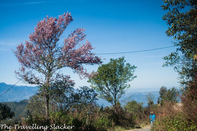 Pfutsero Phek Nagaland (7)