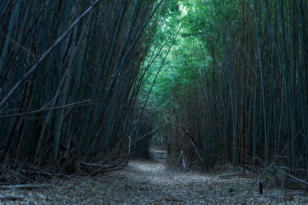 姫路の竹林02
