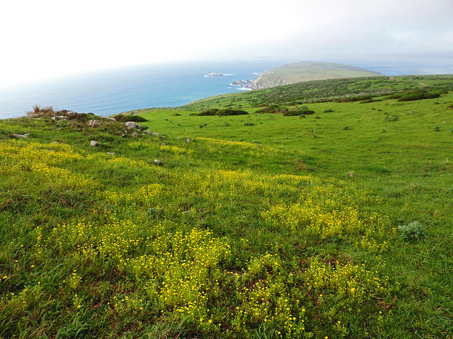 Tomales Point Trail, Point Reyes National Seashore, CA