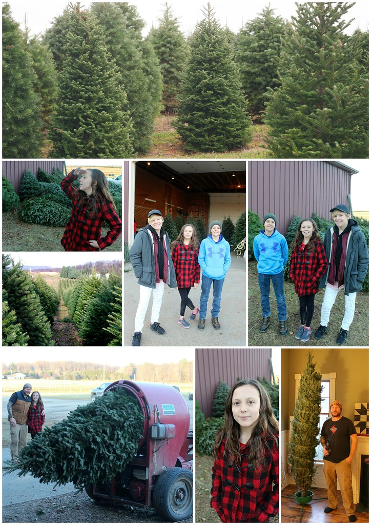 Christmas Tree Farm 2017 Collage