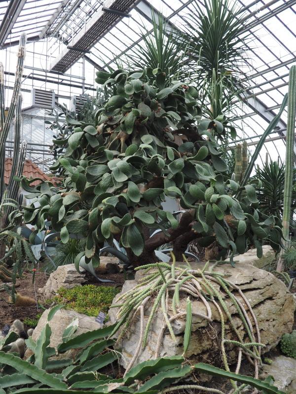 Jardin botanique de Montréal  - 13 décembre 2017 27260845519_0c26e94961_o