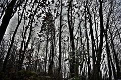 Canaston Woods