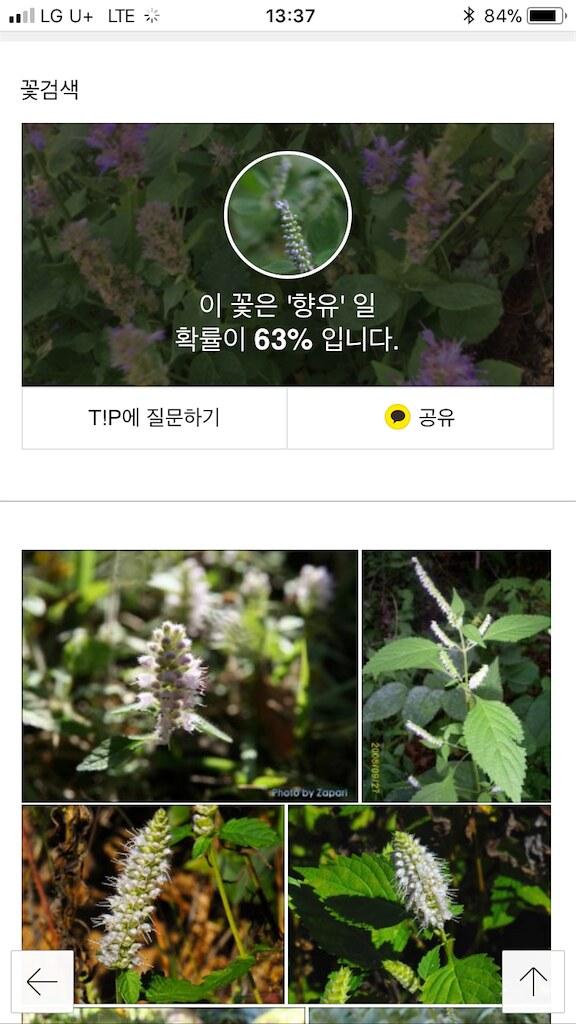 koreanapps-flowersearch8