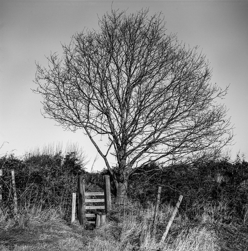 FILM - Tree and stile