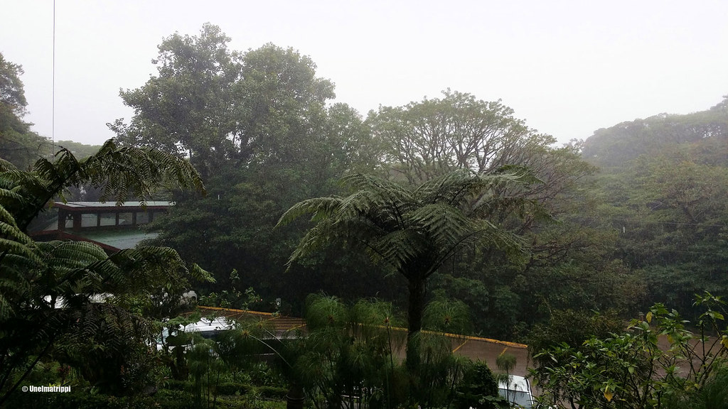 Sateisessa Selvaturassa, Santa Elena, Monteverde, Costa Rica