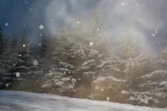 Beautiful Snow Morning