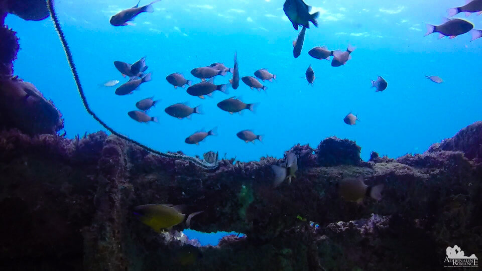 more_reef_fish