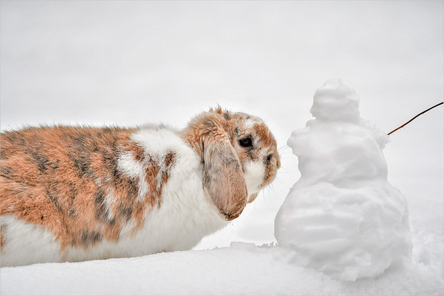 The rabbit and the snowman