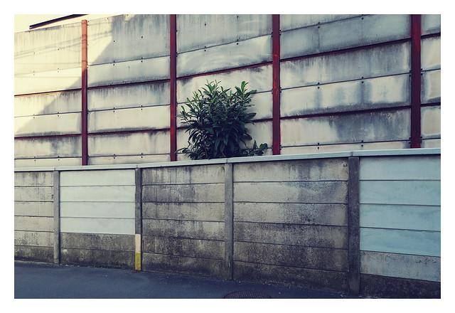 窮屈な木 / in narrow space