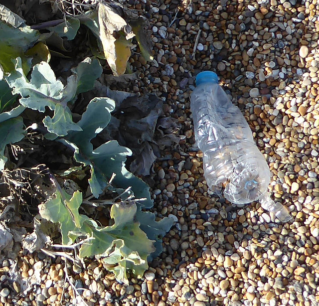 Plastic Bottle and Sea Kale, Cogden Beach
