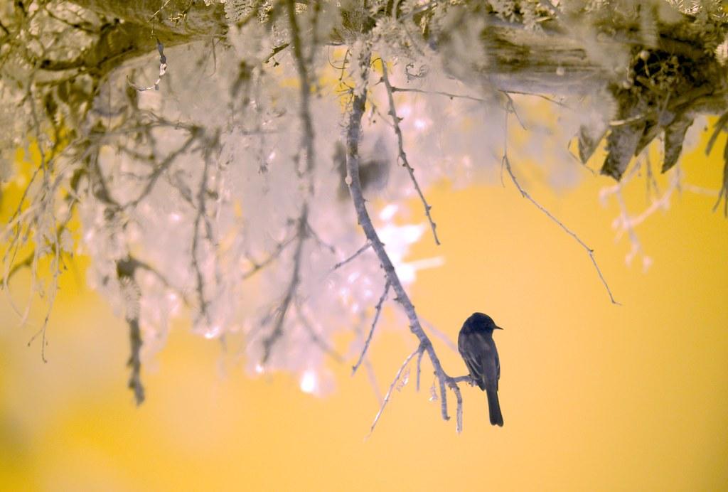 Bird_1_1
