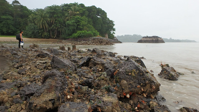 Living rocky shore at Pulau Ubin South