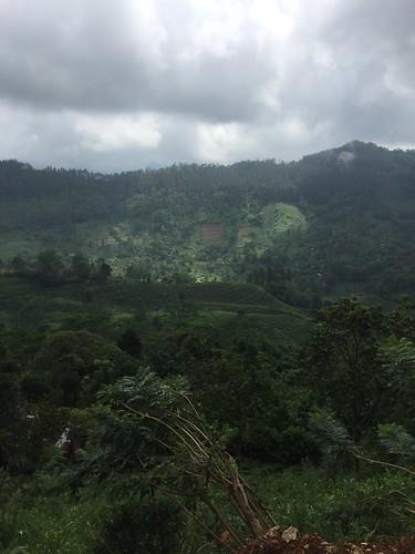 ここからは標高1000m以上の茶畑の道