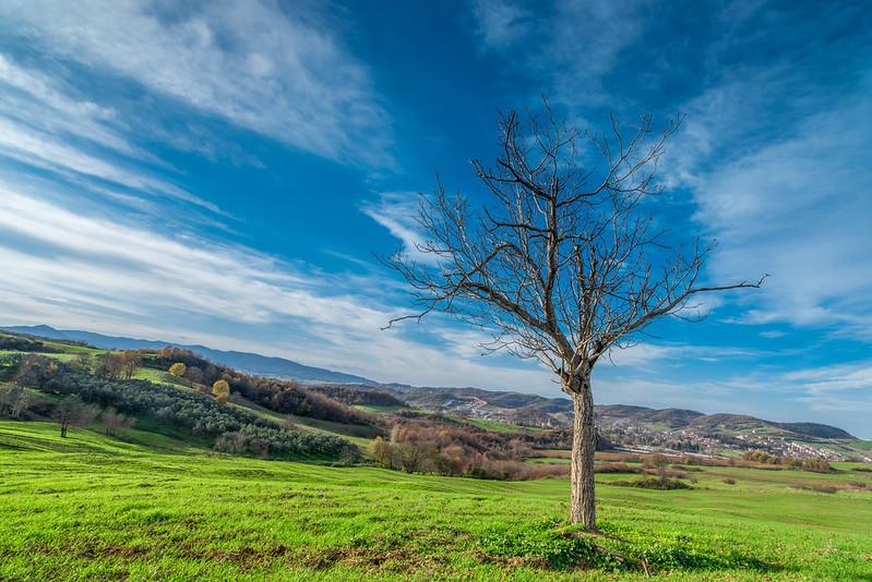 Ağaç bulut ve çimen