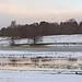 Attingham Park; Tern in flood