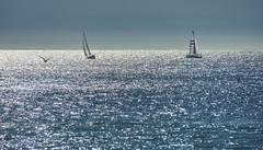 Across the sea I am sailing