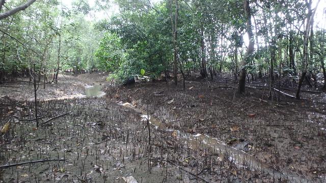 Loyang mangroves