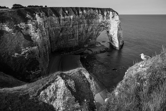 Cliff and gull