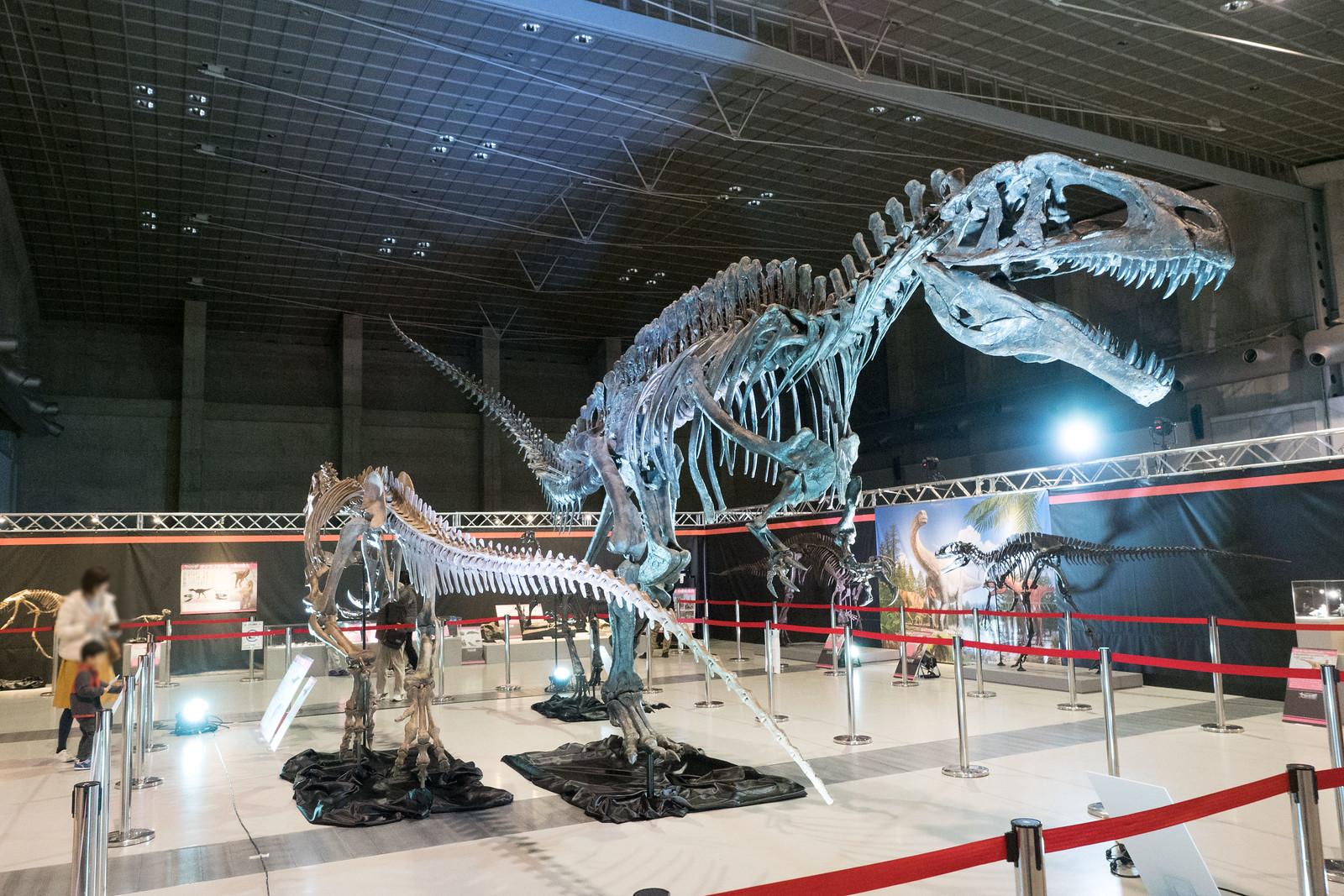 大恐竜博-48