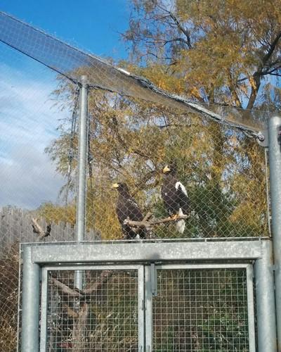 Poised (2) #toronto #torontozoo #birds #latergram