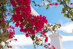 Set of nice red flowers with blue sky background