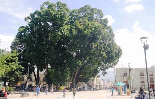 011 Oaxaca (10)