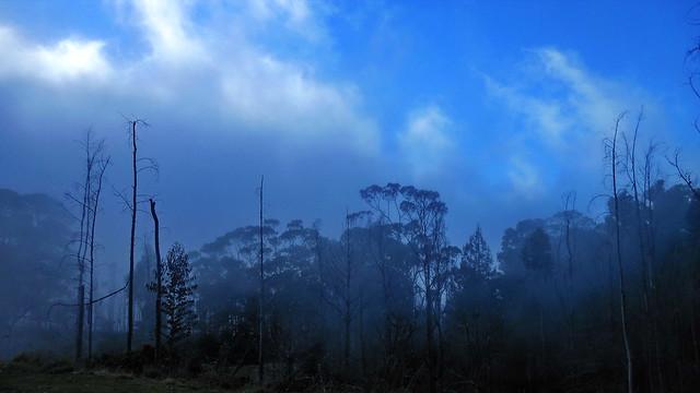 Maui, misty road downhill