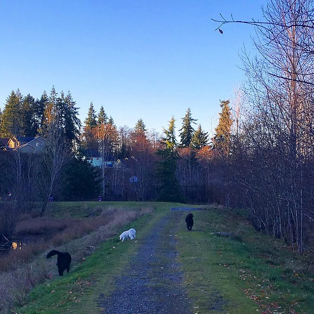 A trio of dog butts on our walk today. 🐶🐶🐶