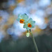 Narcissus by shinichiro*
